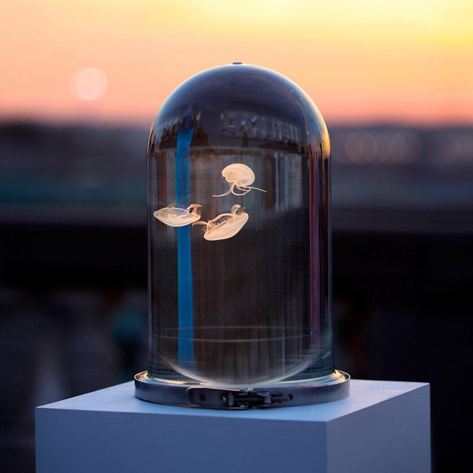 Jellyfish Dome Aquarium