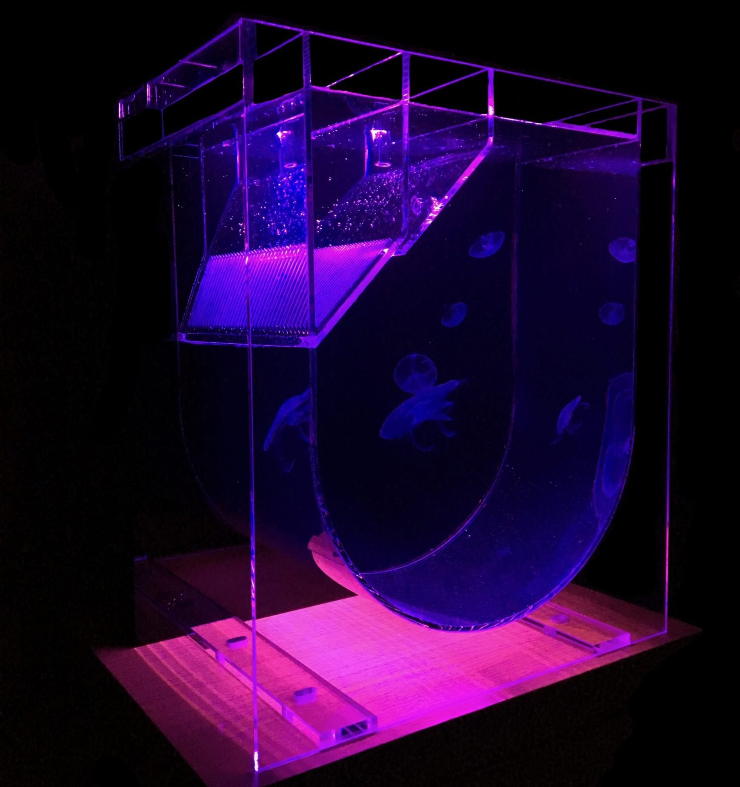 Medusa Jellyfish Aquarium dark with coloured lights